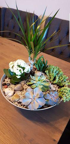 Succulents, Succulent Plants