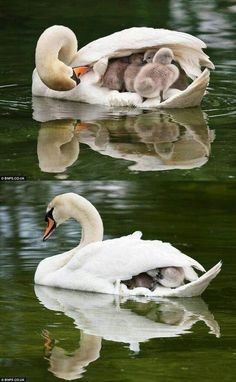 A mother's love...<3