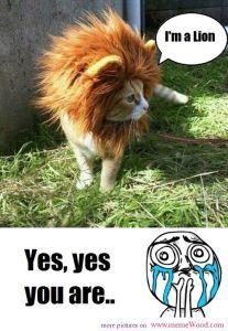 Cuteness overload meme I\'m a lion