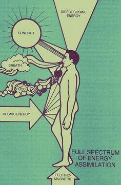 energy assimilation http://www.psychicreadinglounge.com