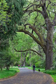 Bidwell Park in the Spring, Chico, California