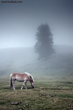 Amazing nature photography - horse