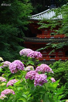 Hydrangea, Gansen-ji Temple, Kyoto, Japan via 紫陽花の寺 岩船寺 #Japan #travel #guide #japantravel #TheRealJapan #Japanese #howtotravel  #vacation #trip #explore #adventure #traveltips www.therealjapan.com Go To Japan, Japan Japan, Japan Trip, Japanese Countryside, Japan Sakura, Hydrangea Garden, Dream Garden, Japan Travel, Kyoto