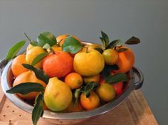 The Rainforest Garden: Satsumas, kumquats, cintrangequats, sunquats...cold hardy citrus