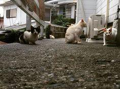 背中に3匹乗ってるよ😃 #過去pic #三重県 #伊勢志摩 #愛猫 #猫 #ねこ #ねこ部 #cat #動物 #野良猫 #ノラ猫 #集団 #道端 #出会う #よく見ると #奥に #3匹 #いる #笑 #背中 #乗ってる #みたい #面白い #最高 #かわいい