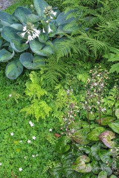 Garden Designers TOP SECRET Plant Picks-  Hosta, Athyrium fern?, Epimedium?, Adiantum?