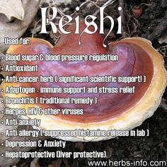 ❤Reishi, also known as lingzhi is a mushroom which has been used medicinally in Asia since ancient times. Although considered non-toxic, it is bitter in taste and not typically used in cuisine.❤