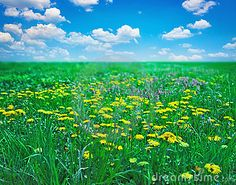Field with flowers by Cornelius20, via Dreamstime