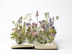 Su Blackwell : Wild Flowers