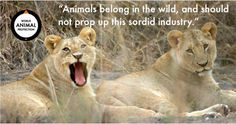 Let's keep reminding people why wild animals belong in the wild #cecilthelion. Please share.
