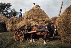 National Geographic captures color and beauty of Ireland in 1927 (PHOTOS) Farmers stack hay on their farm in County Cork. Images Of Ireland, Love Ireland, Ireland Country, Old Photos, Vintage Photos, Irish Free State, National Geographic Photographers, Old Irish, Irish People