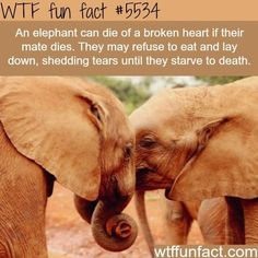 22 Fun Animal Facts You May Never Knew Existed or Cared About... - I Can Has Cheezburger?