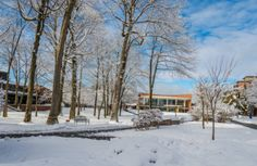 Trees and the dining hall building amongst the snowy landscape on Skidmore College's campus in Saratoga Springs, NY.