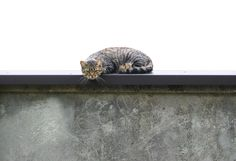 Cat And Wall (Stock Photo By brokenarts) [ID: 206211] - stock.xchng