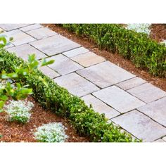 Soon-to-be backyard project. Edging Plants, Backyard Projects, Outdoor Spaces, Outdoor Ideas, Oasis, Outdoor Rooms