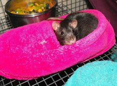 Use a slipper as a bed for your rats! Get a slipper that has a closed toe to ensure that your rat cannot try to exit through the toe area and get stuck. Check that the slipper does not contain any pot Funny Rats, Cute Rats, Hamsters, Pet Rodents, Gerbil, Diy Rat Toys, Pet Toys, Pet Rat Cages, Rat Cage Accessories