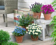 5 askelta helppohoitoiseen puutarhaan