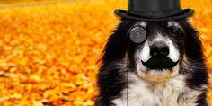 Dog wearing a monocle & mustache (wJCHT via minus.com)