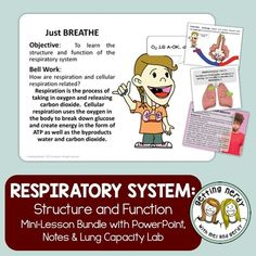 O2 is A-OK in our book... at least that's what you'll learn during our respiratory system presentation, notes and lab. WHAT'S INCLUDED in this 1-2 DAY LESSON: • EDITABLE Animated PowerPoint with daily objective, bellwork, student notes and lab instructions. Includes DIGITAL GOOGLE CLASSROOM links!