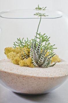 white desert terrarium