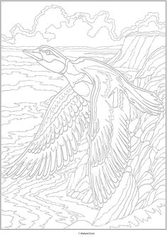 Creative Haven Birds Color By Number - (doverpublications) --> If you're looking for the most popular adult coloring books and supplies including gel pens, colored pencils, watercolors and drawing markers, visit our website at http://ColoringToolkit.com. Color... Relax... Chill.
