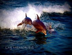 Frolicking Dolphins 8x10 Fine Art Digital Photograph by jjlisa89, $16.00