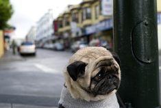 Le chien le plus triste de l'histoire