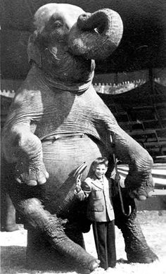 Vintage photo of a kid posing with an elephant-notice he's pressing a bullhook right into this poor animal? THIS IS NOT ENTERTAINMENT! And the saddest part, it still goes on every day-as long as circuses continue to make money. Old Circus, Vintage Circus, Pantomime, Water For Elephants, Circus Performers, Kid Poses, Elephant Love, Big Top, Vintage Pictures