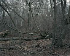 Outer Lands - Dalton Rooney