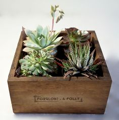 Four succulent pots in a wooden box Succulent Pots, Succulents, Wooden Boxes, Terrarium, Plants, Home Decor, Nappy Cake, Diapers, Wood Boxes