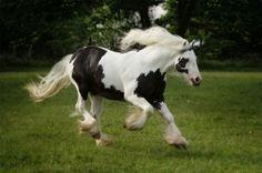 https://www.google.com/blank.html---Percheron Horses