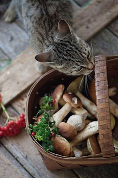 Can cats eat mushrooms? The short answer is it depends. Most store-bought mushrooms are safe for felines, and many cats even enjoy the taste. However, cats shouldn't eat wild mushrooms, as they can be poisonous. Wild Mushrooms, Stuffed Mushrooms, Edible Mushrooms, Country Life, Country Living, Country Charm, Gatos Cats, Slow Living, Farm Life