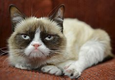 """@chachett  Aubrey plaza to be the voice of Grumpy Cat in the Lifetime movie """"Grumpy Cat's Worst Christmas Ever"""""""