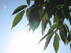 Leaf...Warm Sunshine