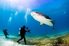 Dive with the sharks... on my bucket list.