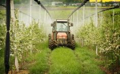 Top Selling Weed Killer – Monsanto's Roundup – Linked to Infertility.    These are important things to pay attention to!