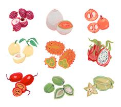 "Jeannie Phan Illustration - A Collection: Exotic Fruit"", acrylic gouache on paper"