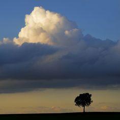 BIG Cloud! LITTLE Tree.