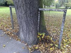 Tree growing around a park fence