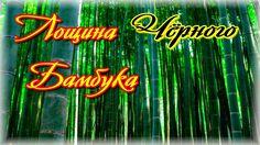 Загадки Земли. Лощина Черного бамбука
