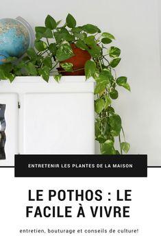 43 Ideas For Plants Interieur Entretien Outdoor Plants, Garden Plants, House Plants, Herb Garden, Plante Pothos, Plant Logos, Planting For Kids, Belle Plante, Mosquito Repelling Plants
