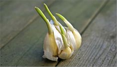 Another common but toxic houseplant is garlic. It's a vegetable garden plant that contains N-propyl disulphide which is a poison that can bring about deterioration of red blood cells, blood in urine, panting, lethargy, and rapid heartbeat.