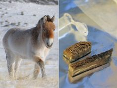 'Breaking the time barrier': 700,000-year-old horse fossil oldest ever found from DNA mappedanimal