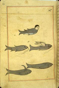 17th-century Mughal India illustrated version of a 13th-century Arabic treatise by Zakariya al-Qazwini titled 'Ajā'ib al-makhlūqāt wa-gharā'ib al-mawjūdāt (Marvels of Things Created and Miraculous Aspects of Things Existing).