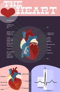 Necrotizing Fasciitis Picture of necrotizing fasciitis ...