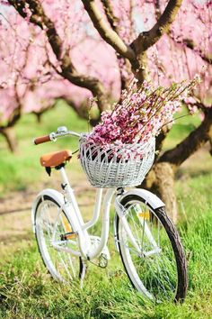 Beautiful spring inspiration with spring quotes and aesthetic! #spring #inspiration #springquotes #aesthetic Spring Quotes, Spring Wallpaper, Spring Aesthetic, Spring Home Decor, Love Is All, Spring Flowers, Shabby, Inspiration, Beautiful