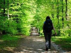 Wandelvakantie in Nederland Kanken Backpack, Hiking, Mountains, Travel, Tips, Smartphone, Health, Walks, Viajes