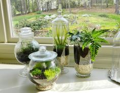 {Home-ology} modern vintage: Making a Terrarium - Gardening For the Commitment Phobe