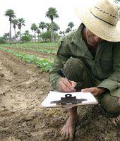 La contratación de la producción, a pie de surco, es una garantía para hacer cumplir los compromisos pactados (foto GILBERTO RABASSA)