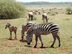 7 Safari Tours In Tanzania Ideas Tanzania Safari Tours